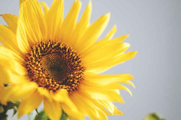 nature-flowers-pattern-circle.jpg