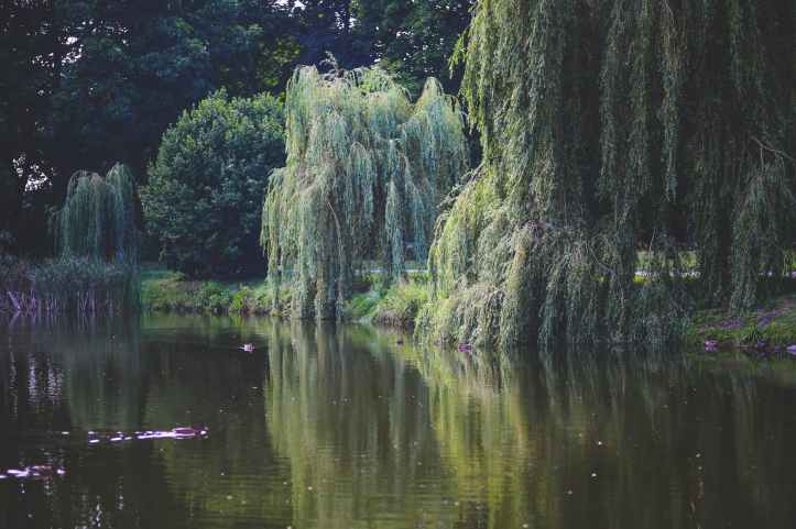nature-water-garden-trees.jpg